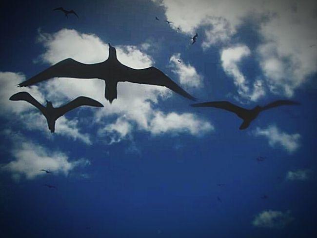 Taking Photos Amazing_birds Lovelovelove Nature Photography Blue Sky