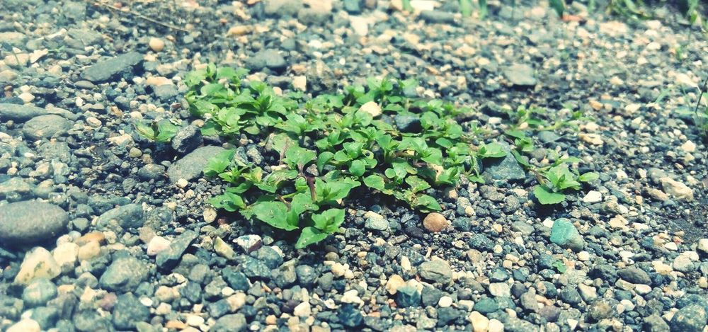 Even little things grow`