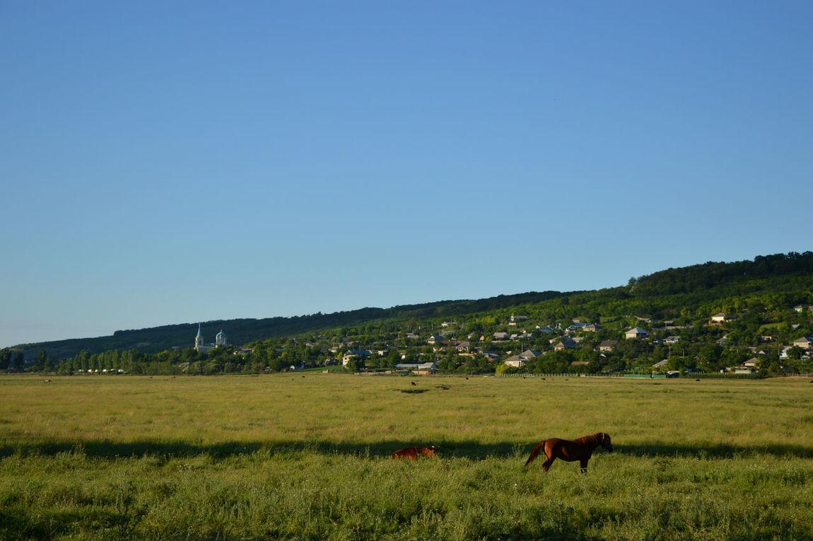 Moldova Carpineni Foto Sceen Landscape Landscape_Collection Landscape_photography