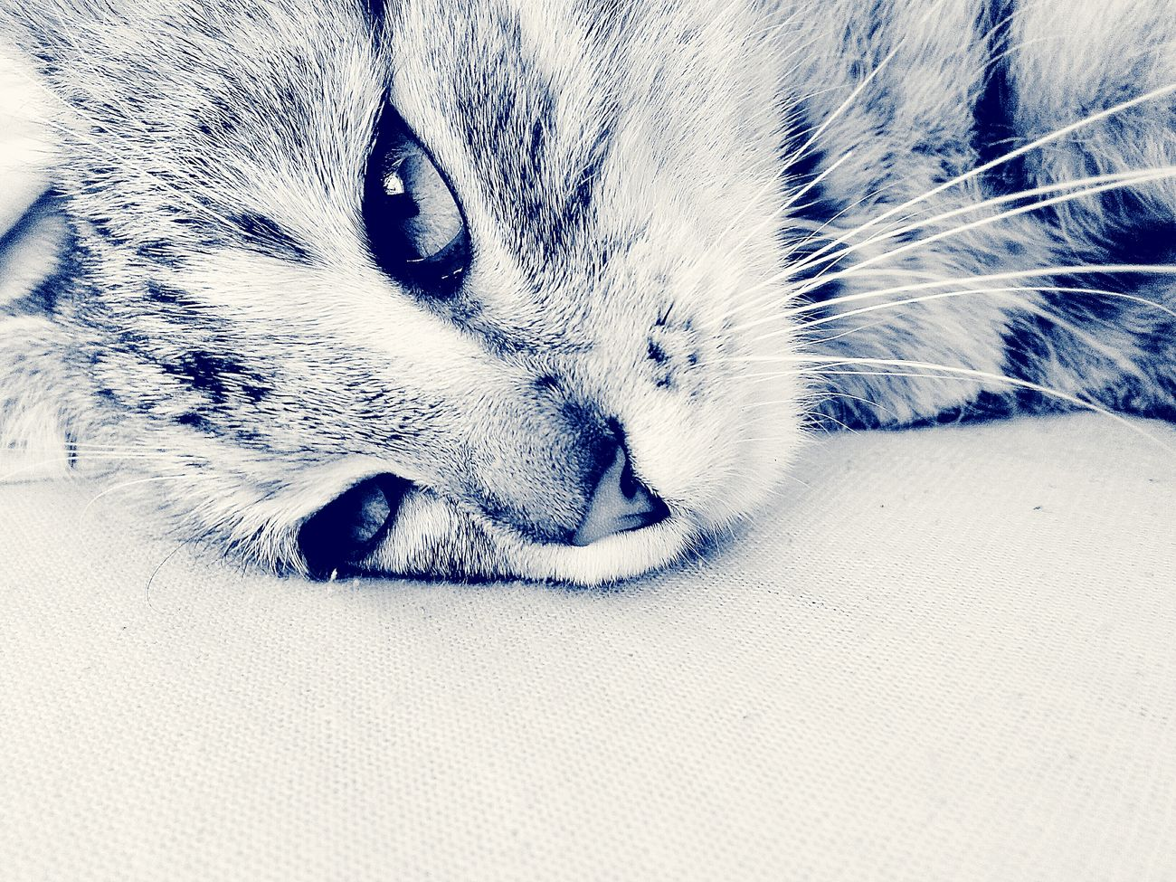 Relaxing Edit My Cat♥ Lightness Hello World Eyes That's Me Cat♡ Enjoying Life Nature Photography Taking Photos Thinker Hanging Out Spring! Catoftheday Cat Model MyPhotography Nature Dreamer