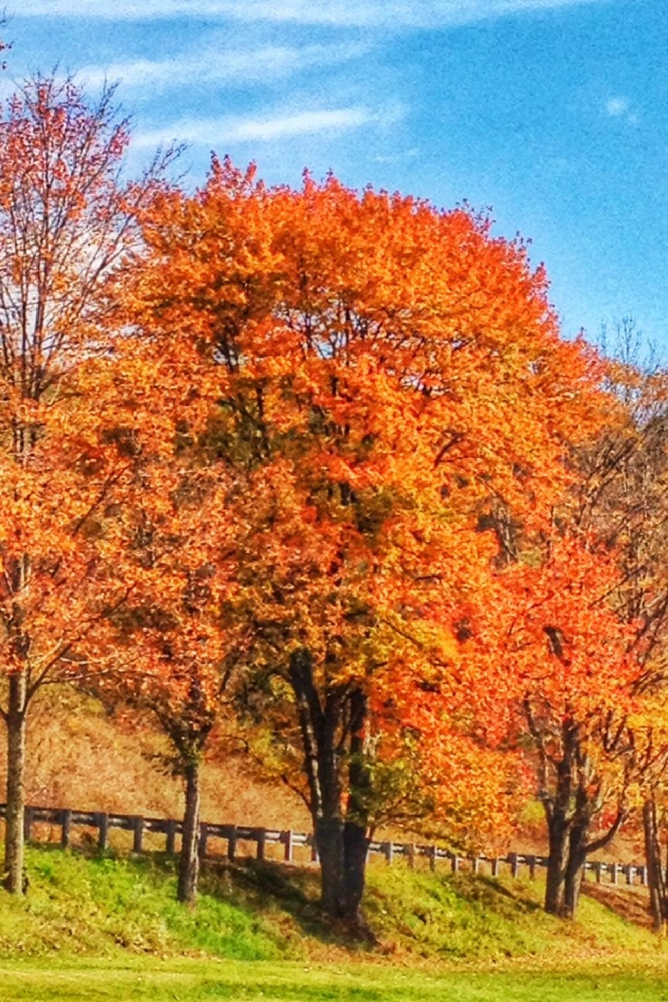 Treegasmic Tuesday TreeGasmicTuesday EE_Daily: Orange Tuesday Beautiful Autumn