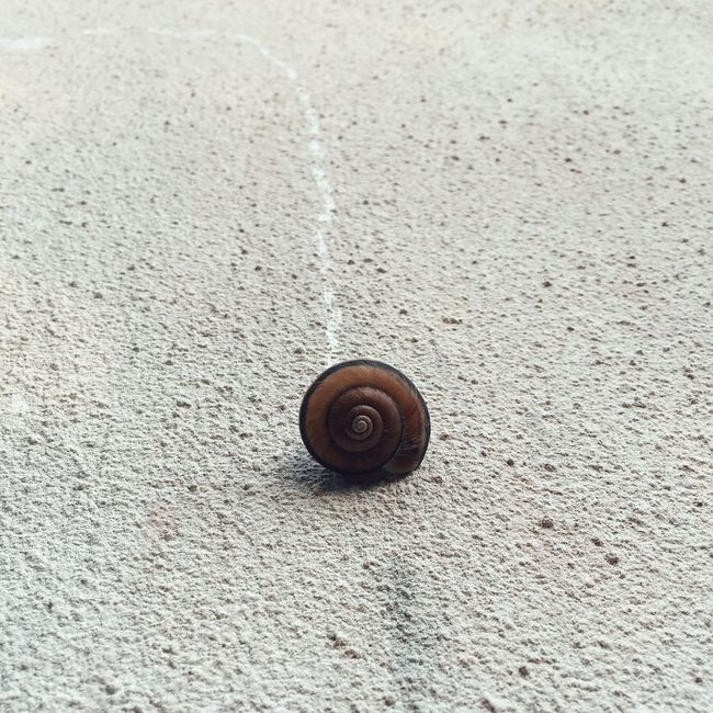 Snail Streetphotography IPhoneography Check This Out Wall Snapshots Of Life