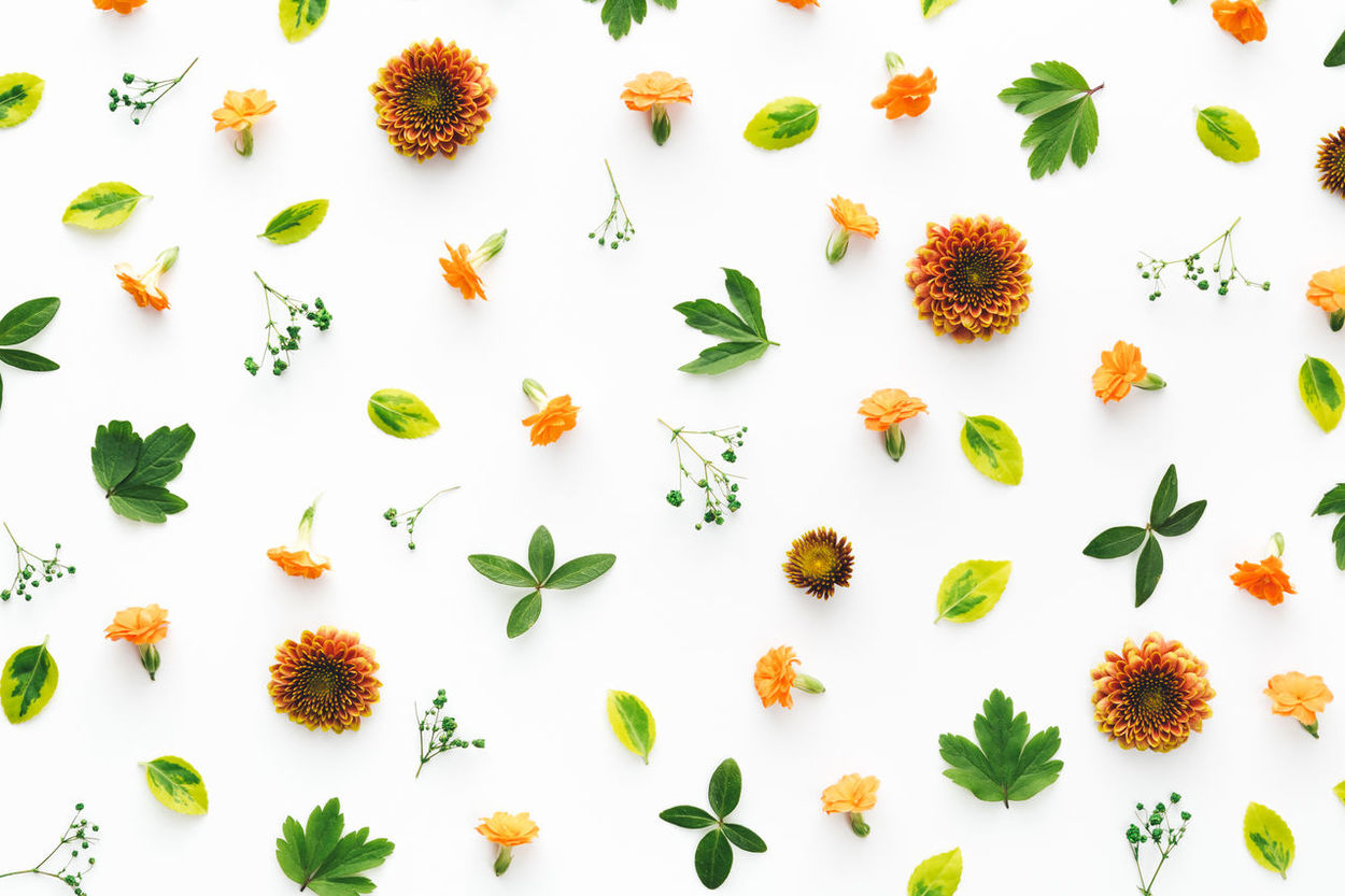 Orange flowers and green leaves arrangement on white backgroun Above Arrangement Backgrounds Close-up Compositions Flower Flower Head Flower Heads Freshness Full Frame Green Color High Angle View Leaves Nature No People Orange Color Pattern Plant Studio Shot Wallpaper White Background White Color