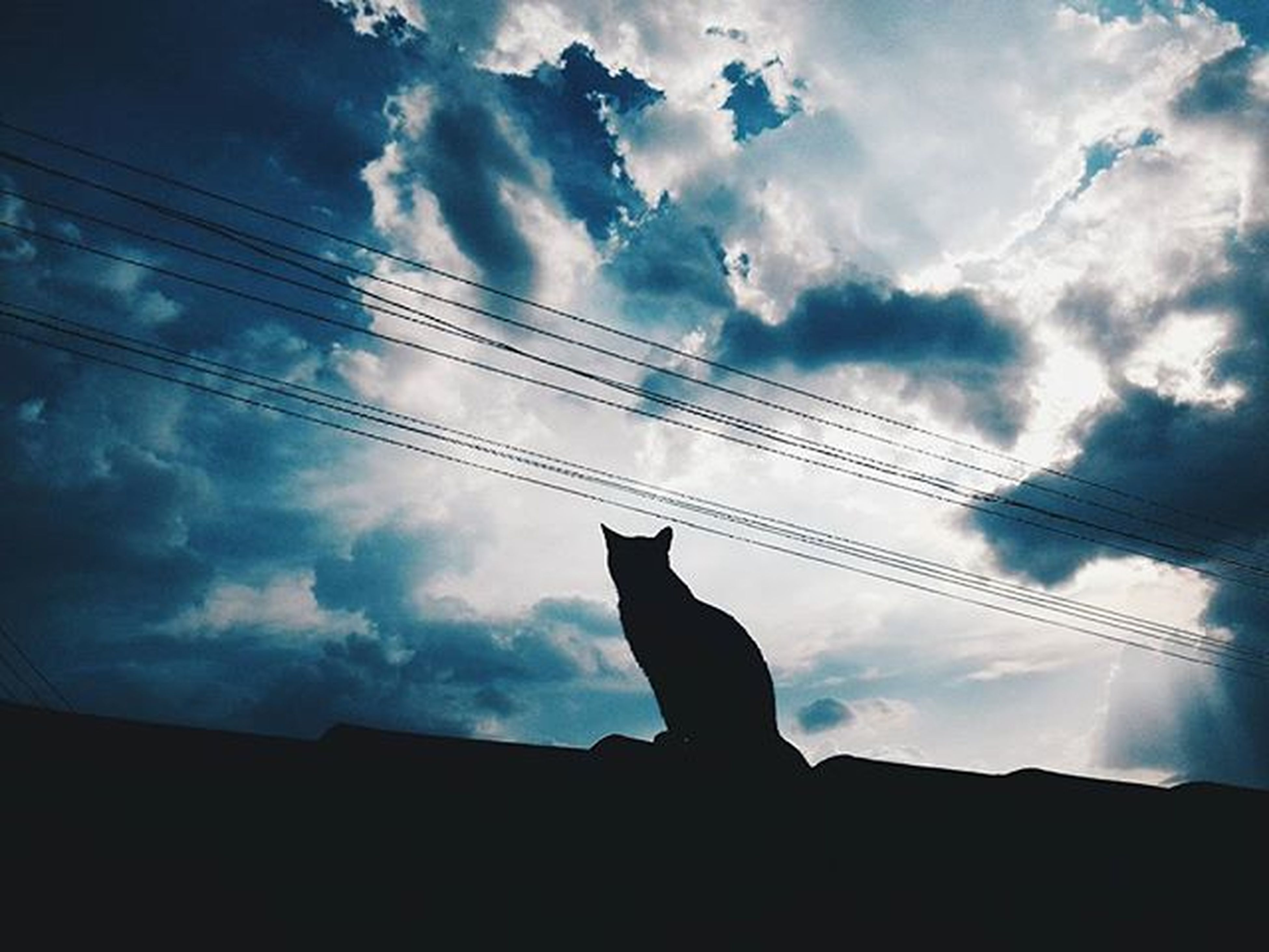 animal themes, sky, one animal, low angle view, cloud - sky, mammal, silhouette, pets, domestic animals, cloud, cloudy, domestic cat, power line, architecture, built structure, cable, building exterior, outdoors, cat, wildlife