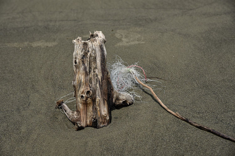 The driftwood with garbage on the beach. Drift Wood  Fishing Net Wood Beach Drift Wood  Drift Wood Collected From Beach Drift Wood On Beach Drift Wood Photography Drift Wood Structure Driftwood Environment Fishing Nets Garbage Net Protect Protection Sand