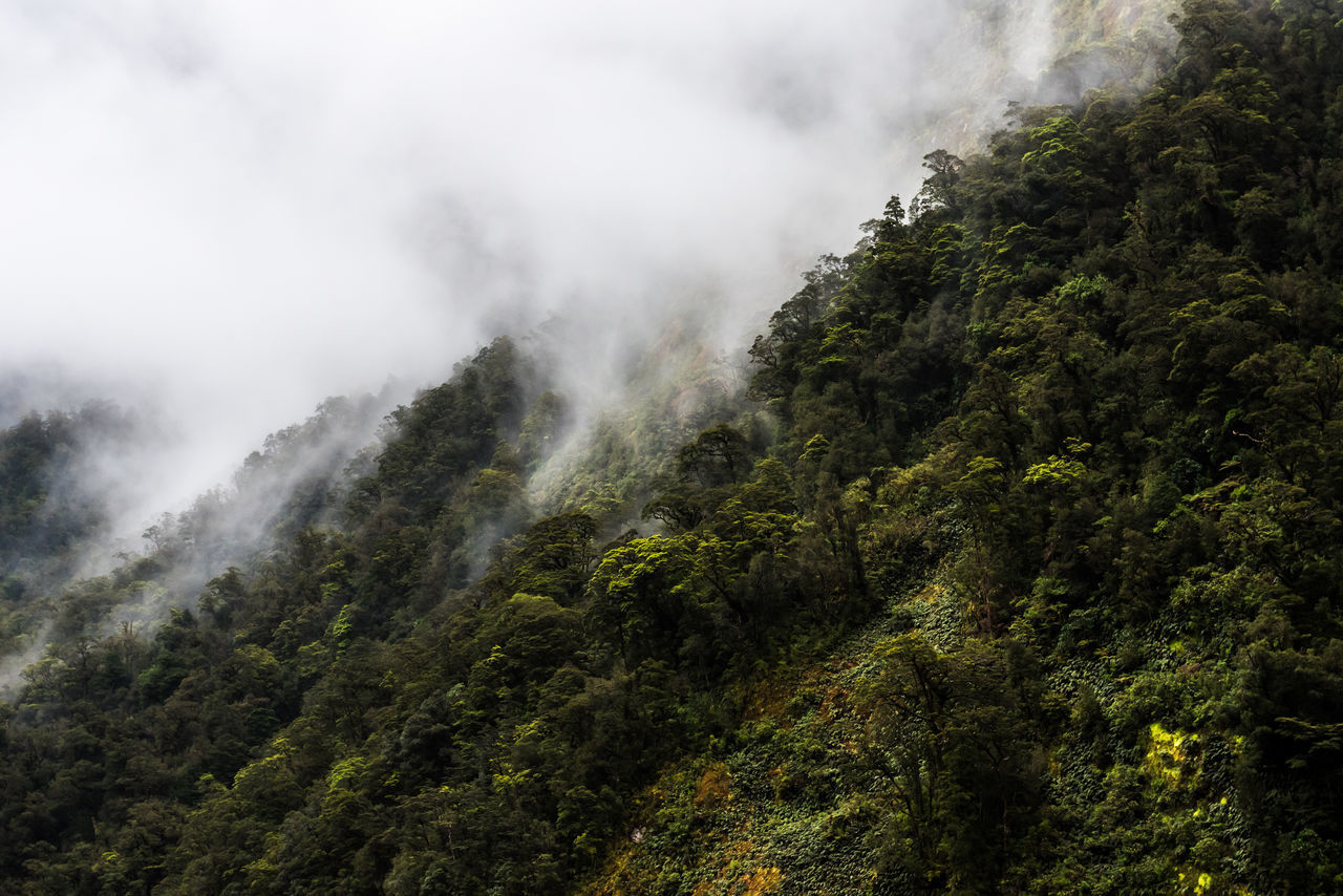 Beauty In Nature Cloud - Sky EyeEmNewHere Fog Forest Freshness Green Color Hanging Out Landscape Mountain New Zealand Beauty New Zealand Scenery No People Outdoors Rain Forest Scenics Sky Doubtful Sound Tranquility Travel Destinations Tree Vacations The Great Outdoors - 2017 EyeEm Awards Neighborhood Map in Manapouri, New Zealand
