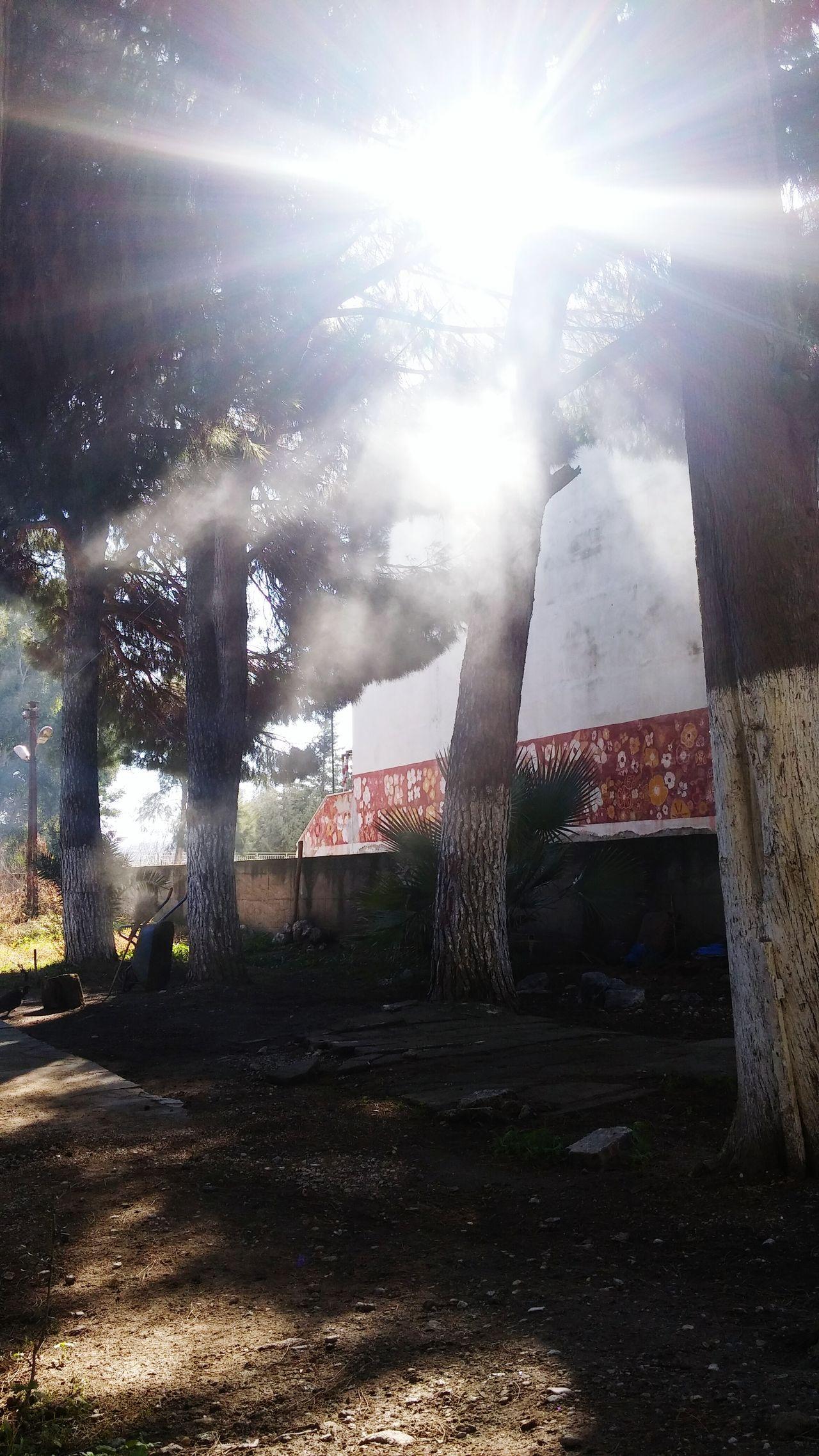 Its A Newday Sunmorning Tropical Climate BerkayKarakas Taking Photos Showcase: January Aydin/Turkey Ortaklar