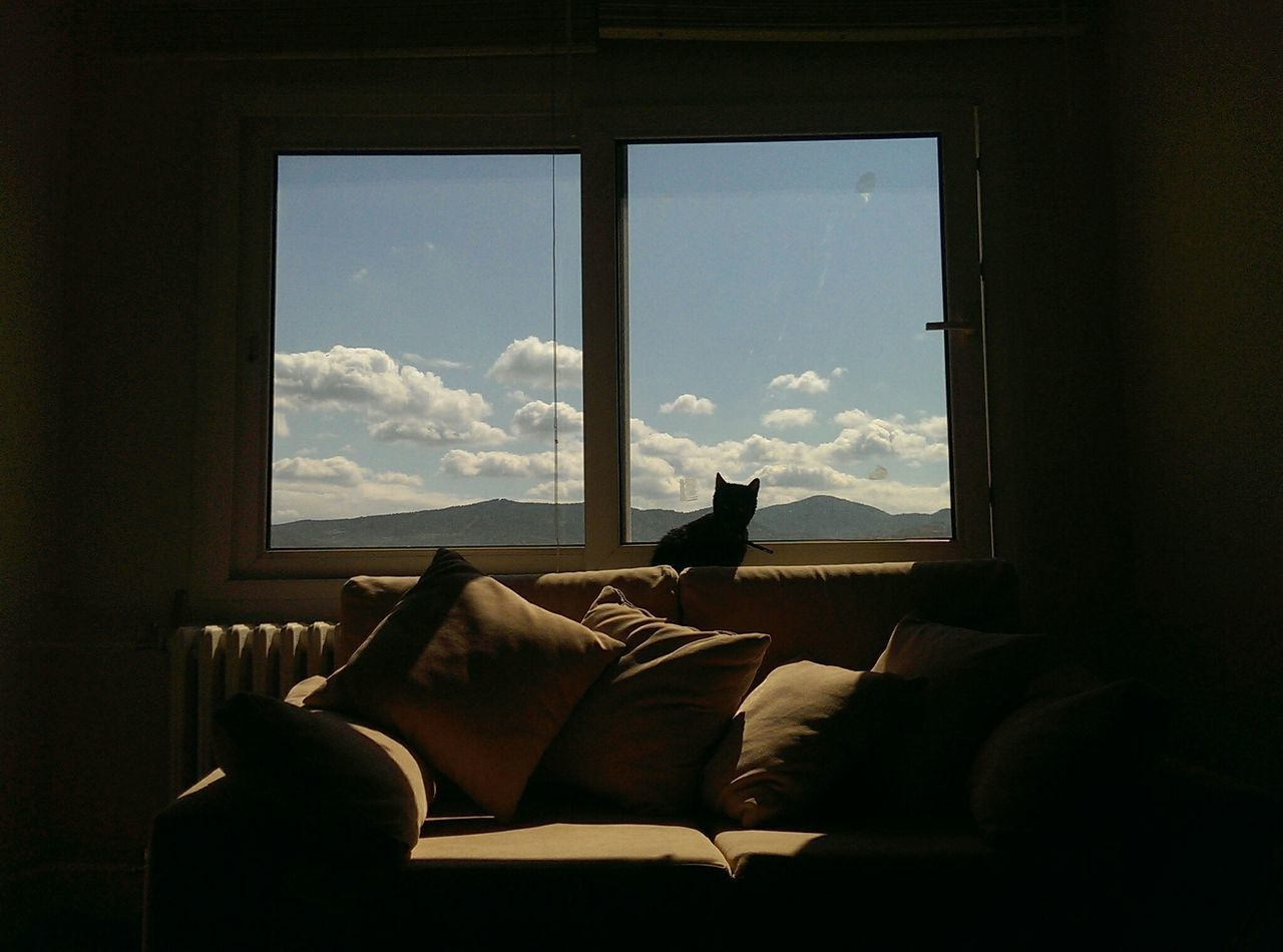 Beautiful stock photos of living room, Animal Themes, Cat, Cloud - Sky, Cushion