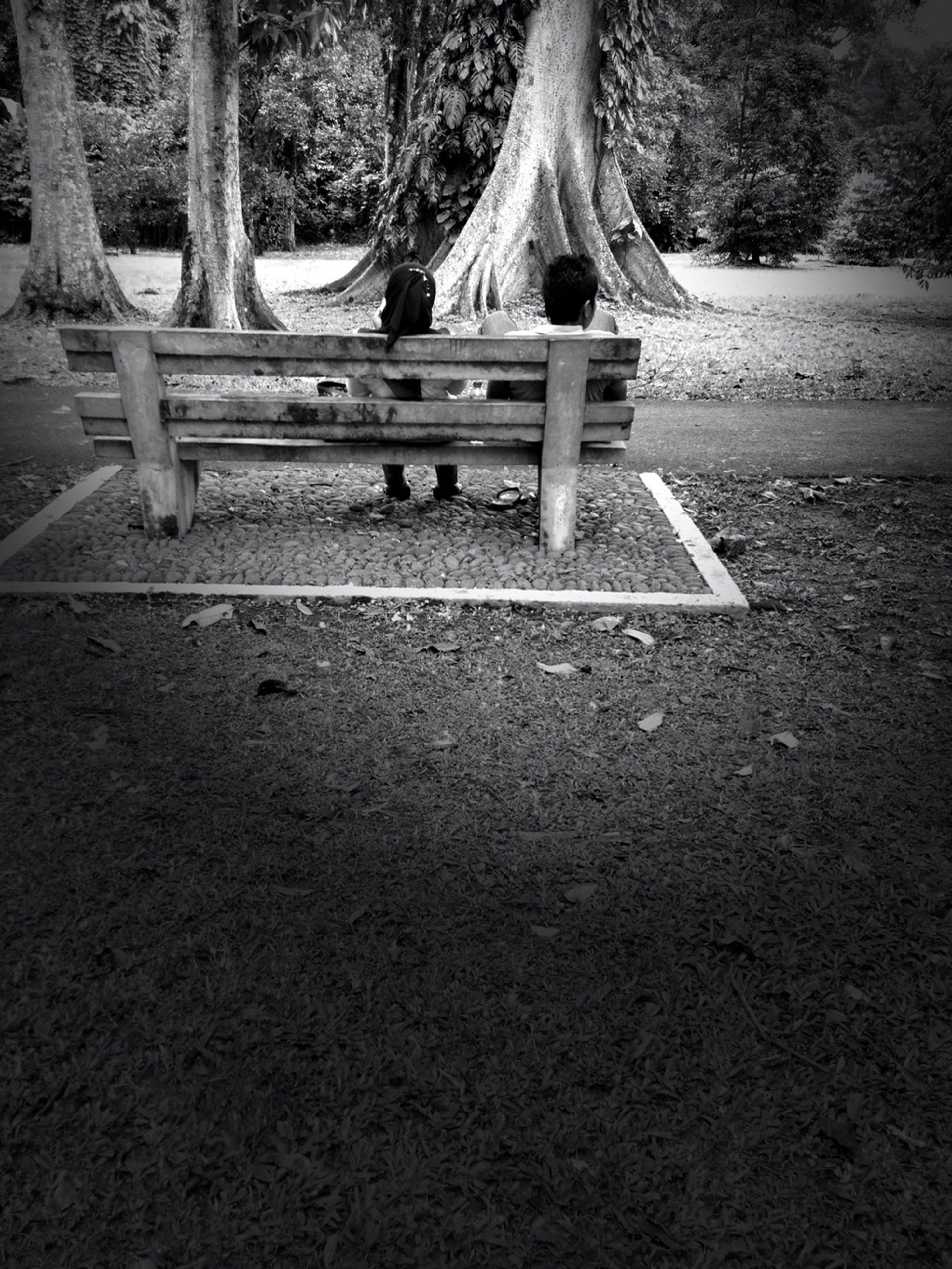 tree, tree trunk, park - man made space, forest, bench, leisure activity, lifestyles, park, wood - material, childhood, park bench, full length, nature, tranquility, day, outdoors, sunlight, growth