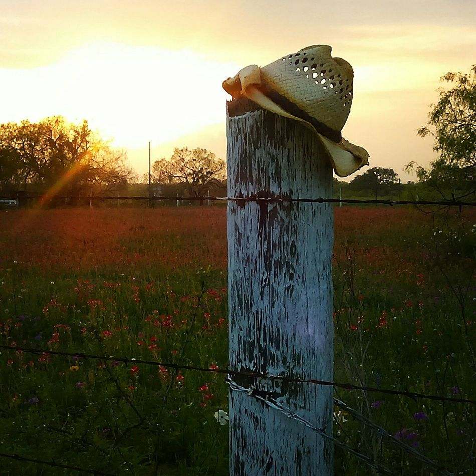 I love me a good country sunset! Taking Photos Getting Inspired Enjoying Life Sunset Lovers Sunset Showing Imperfection Country Life Wildflowers Barbed Wire Fence Post Cowboy Hat From My Point Of View Natural Beauty Nature Skyporn Sunlight Beautiful Nature April Showcase Eye4photography  Ranch Life Popular Photos Beauty Country Living Country Sky Outdoor Photography