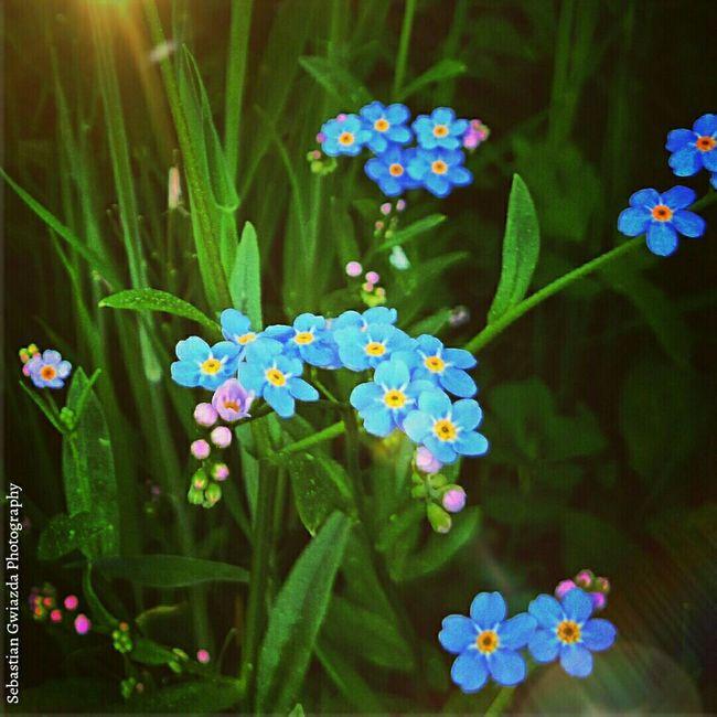 The Best Of Jastrzębie - Zdrój Jastrzębie - Zdrój Nature_collection EyeEm Nature Lover Flowers Beautiful Nature