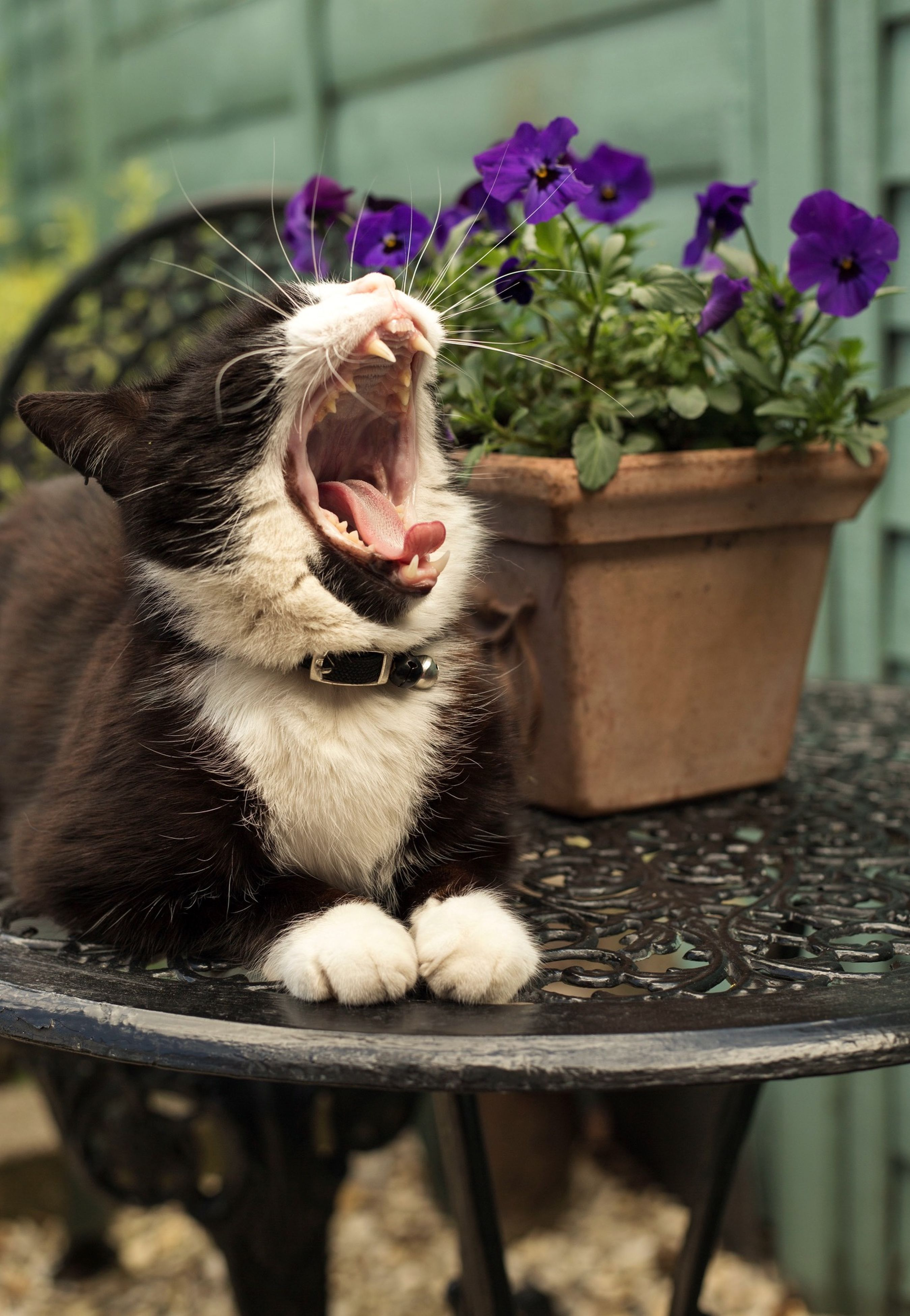 animal themes, one animal, domestic animals, domestic cat, pets, mammal, cat, feline, flower, whisker, plant, focus on foreground, portrait, looking at camera, potted plant, close-up, sitting, nature, relaxation