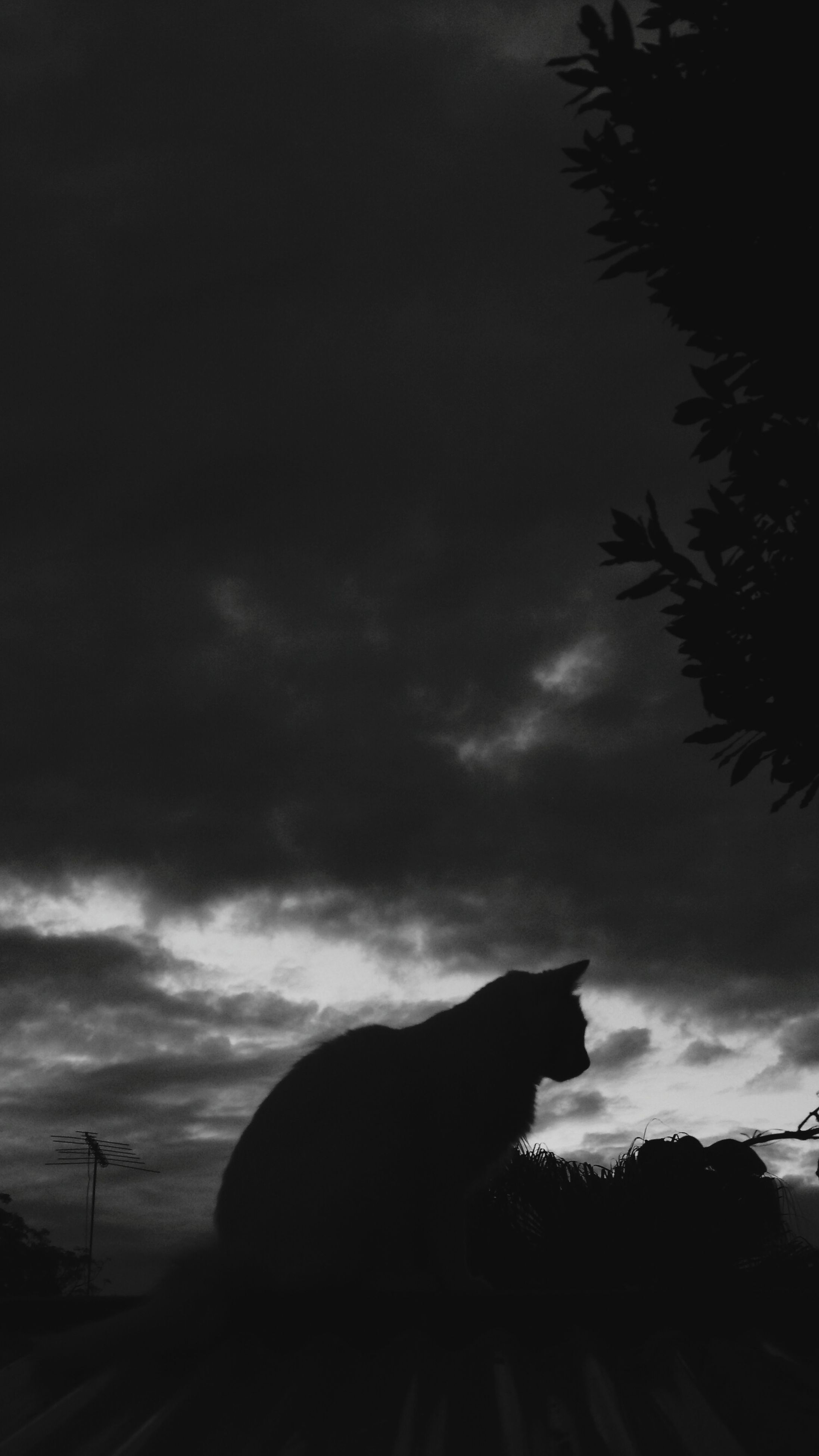 one animal, mammal, domestic animals, animal themes, pets, domestic cat, sky, silhouette, no people, nature, outdoors, feline, day