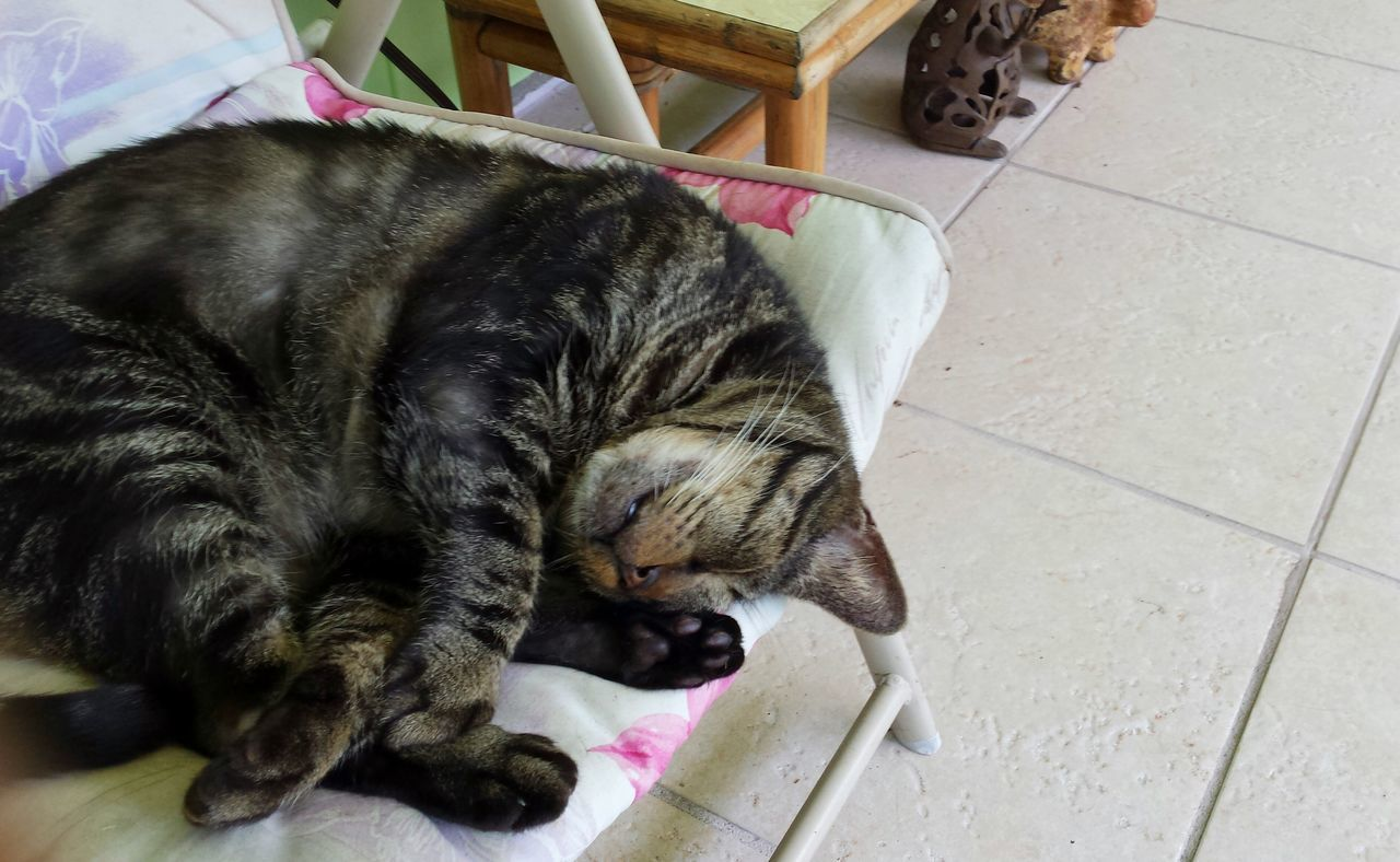 Baxter Animal Themes Pet Photography  Cats Relaxing In The Lanai Another Hard Day Thats My Boy