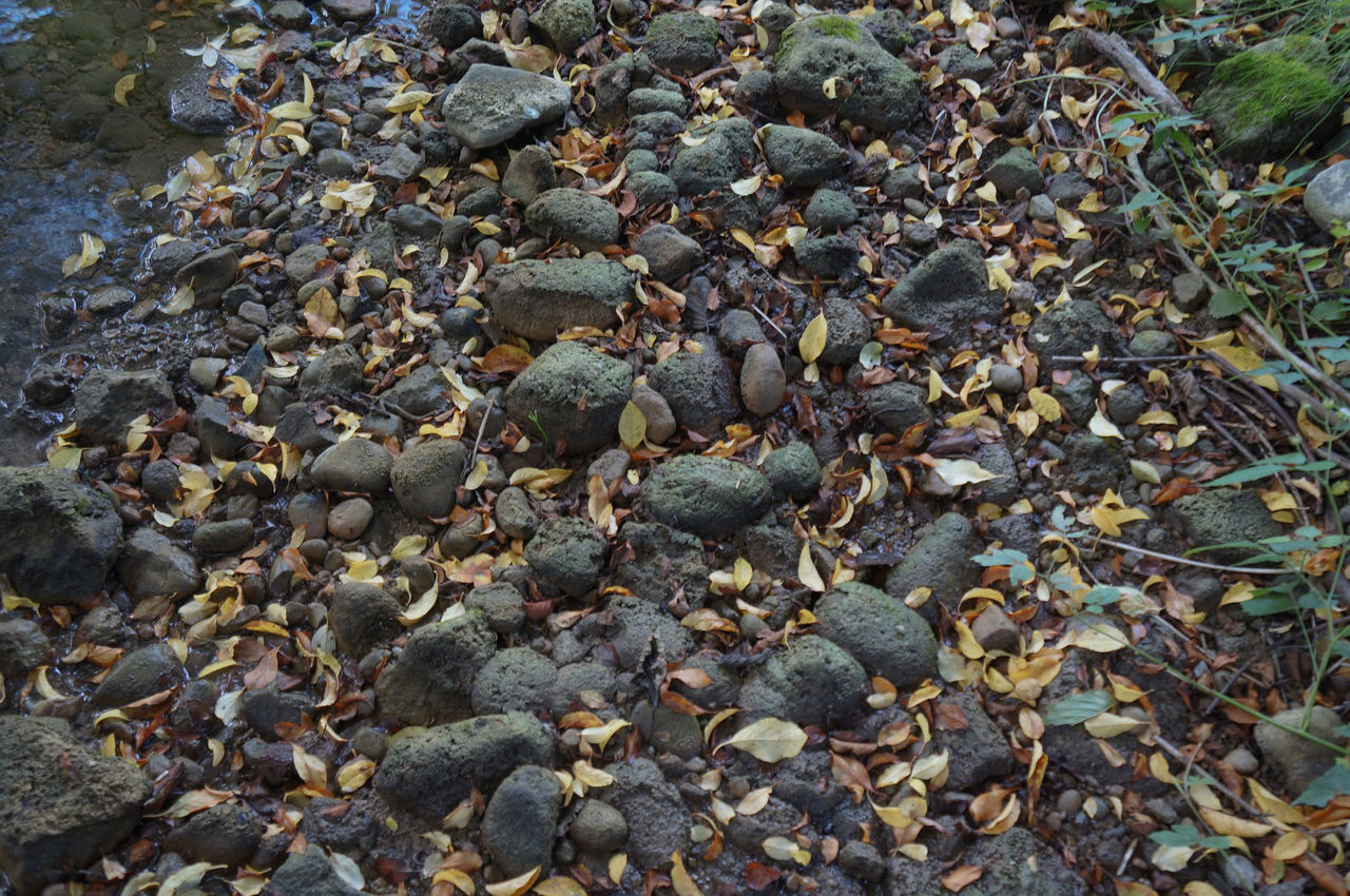pebble, beach, nature, full frame, no people, abundance, pebble beach, backgrounds, day, outdoors, beauty in nature, close-up