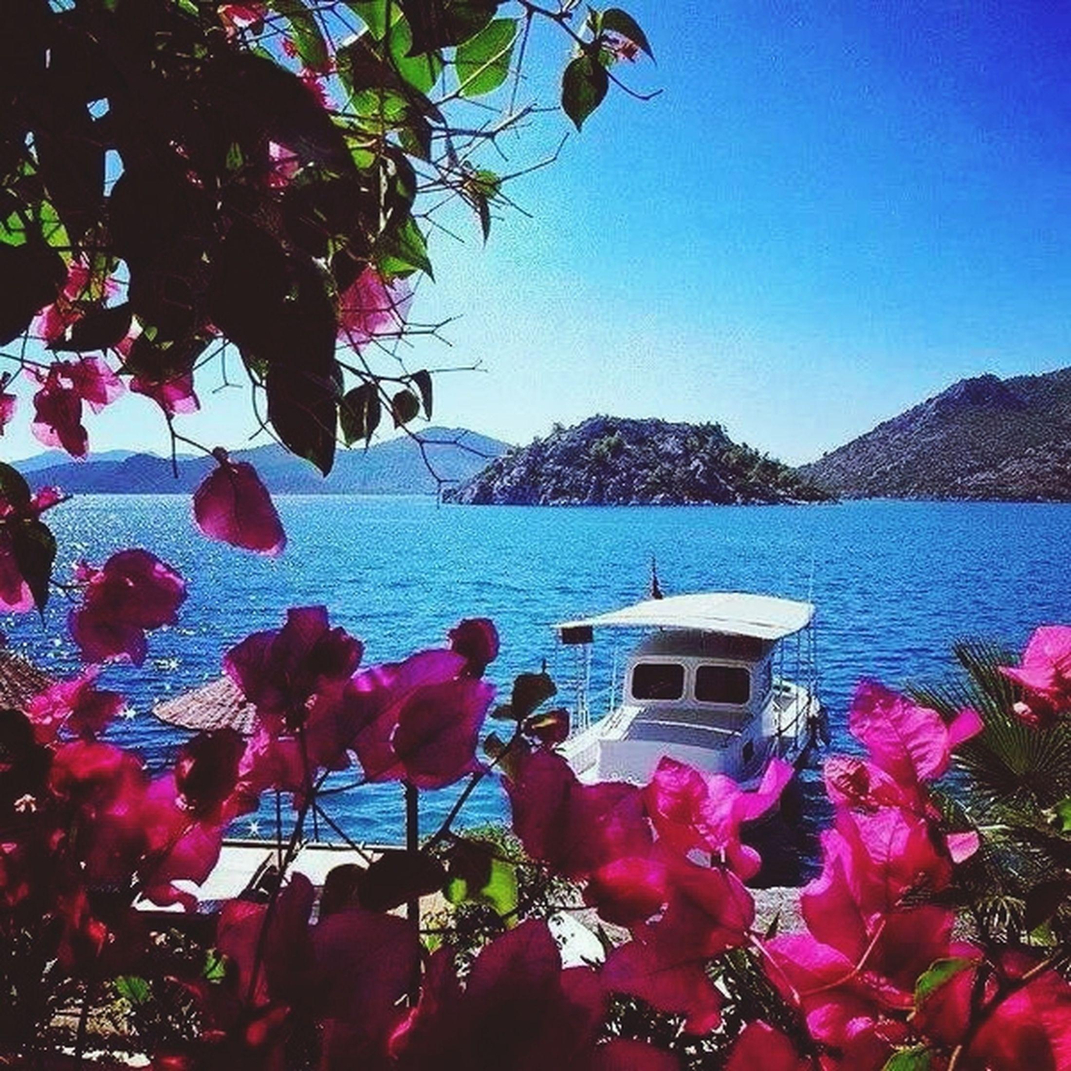 Pink Flowers :) Manzara Deniz Aşk