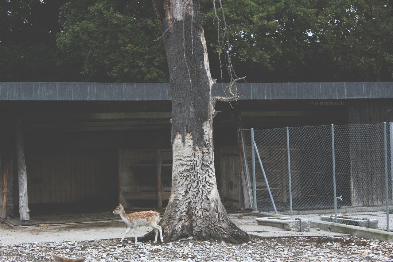 Animal Cage Deer Geneve Nature No People Outdoors Tree Zoo