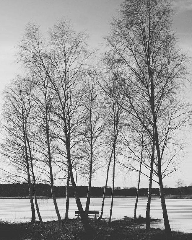 Ig_captures_nature Ig_sweden Tree_captures Lumix Panasonicg7