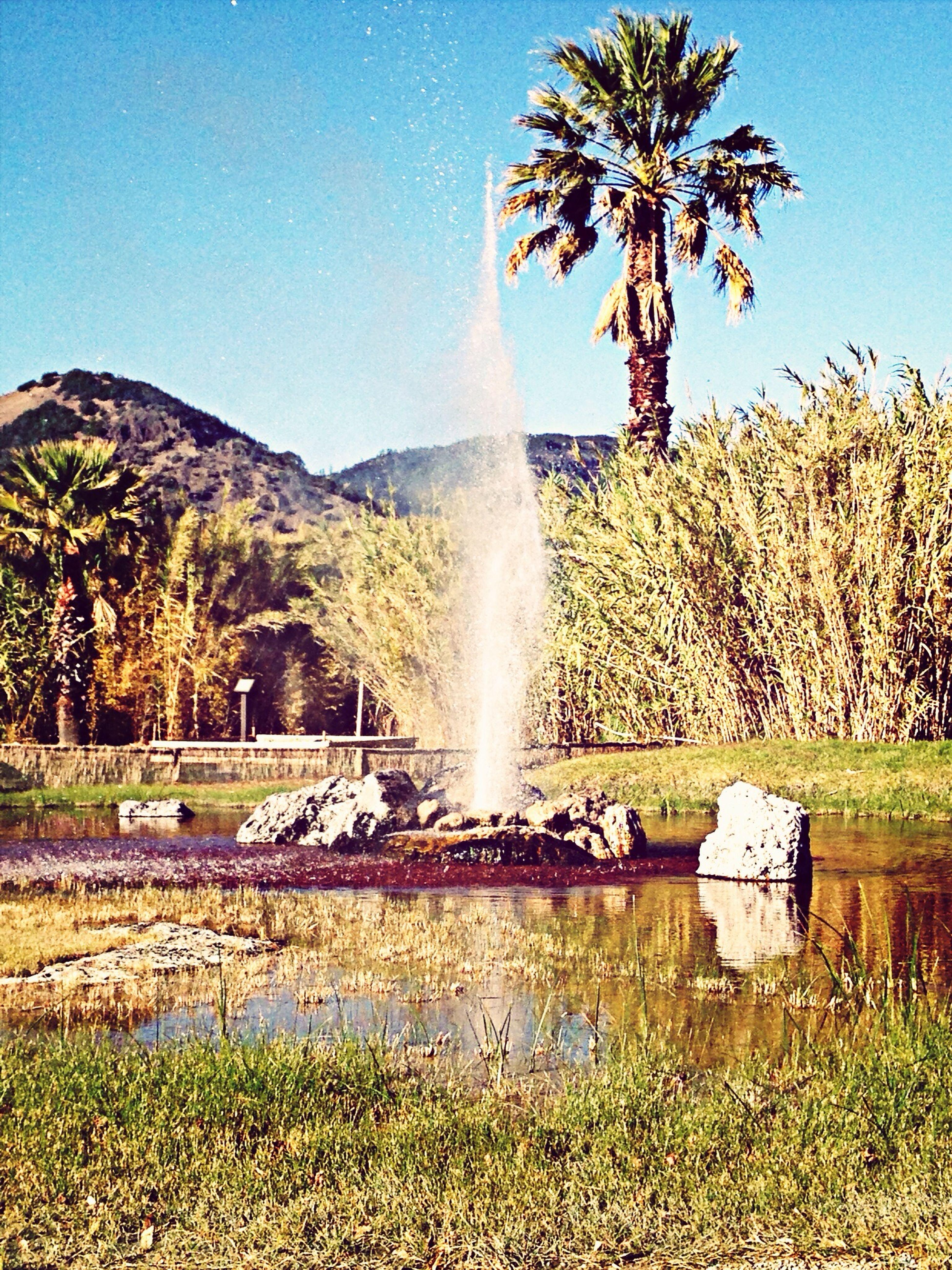 Geyser SpcEfx California Palm Trees Water California Beauty Rare Natural Occurances Natur Natural Beauty Mothernature Travel
