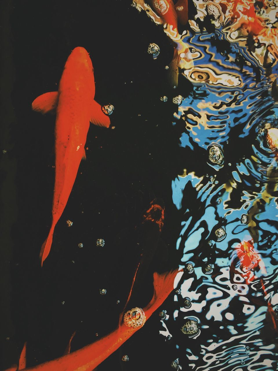 Directly Above Shot Of Koi Carp Swimming In Pond
