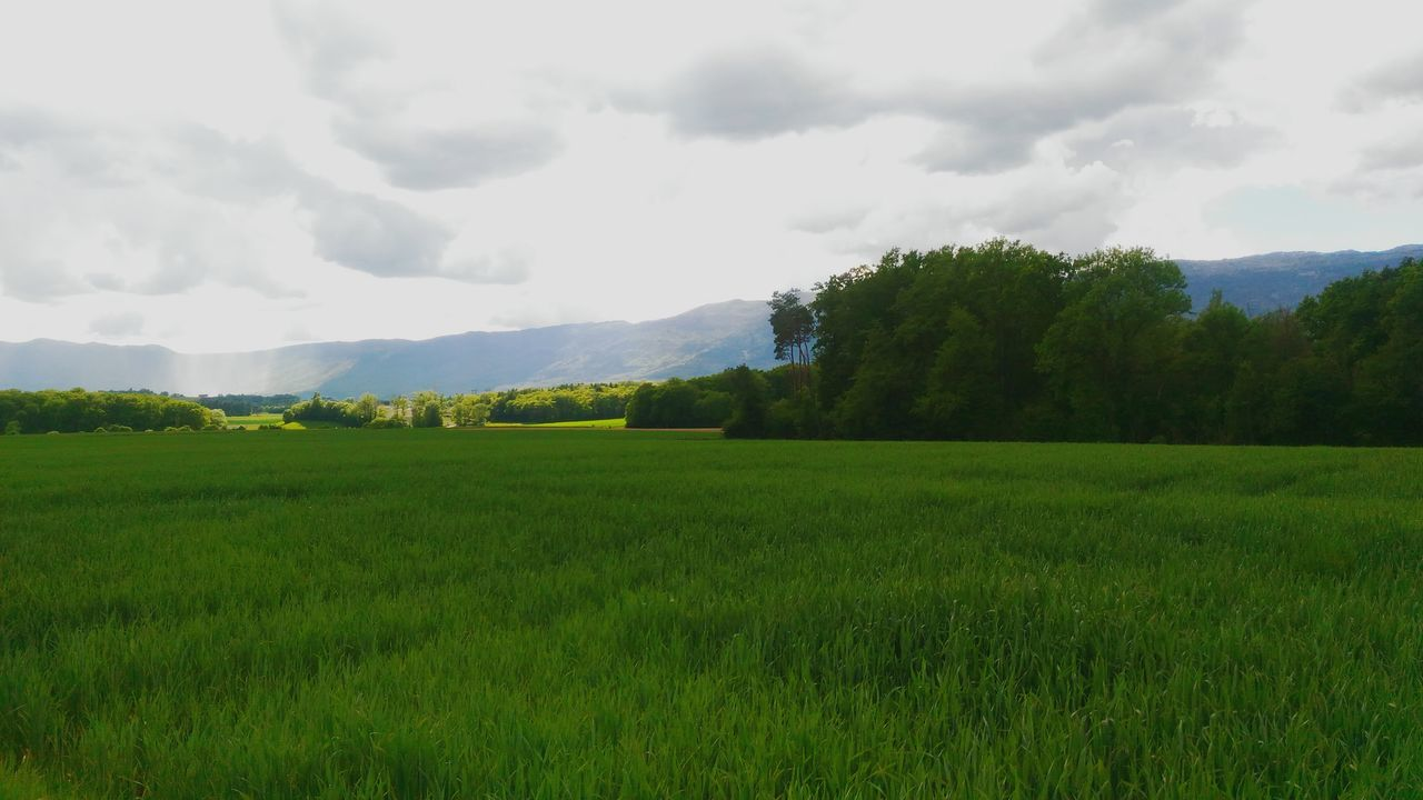 Geneva gets better each day Field Nature Beauty In Nature Lush - Description Landscape Cloud - Sky Agriculture Tree Farm Crop  Tranquility Rural Scene No People Grass Growth Rice Paddy Outdoors Sky Scenics Irrigation Equipment First Eyeem Photo