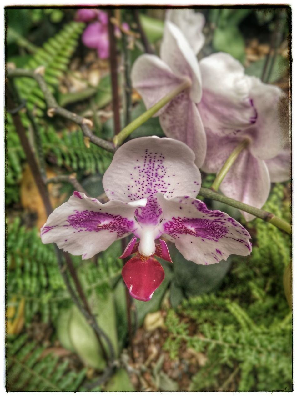 Flower Plant Growth No People Beauty In Nature Close-up Flower Head Purple Orchid Indoor Garden Indoor Gardening Orchid Blossoms Tranquil Scene Orchids Garden Flowers Orchid Blossom Flower Growth Orchidea