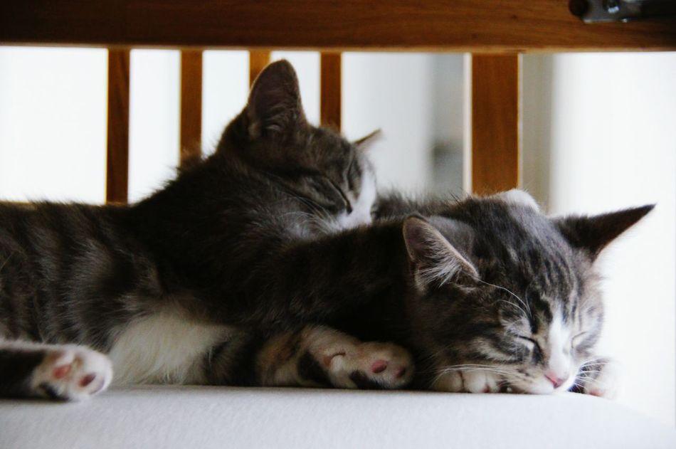 Cats Baby Cats Django & Schmock My Cats Sleeping Cute Pets Nofilter