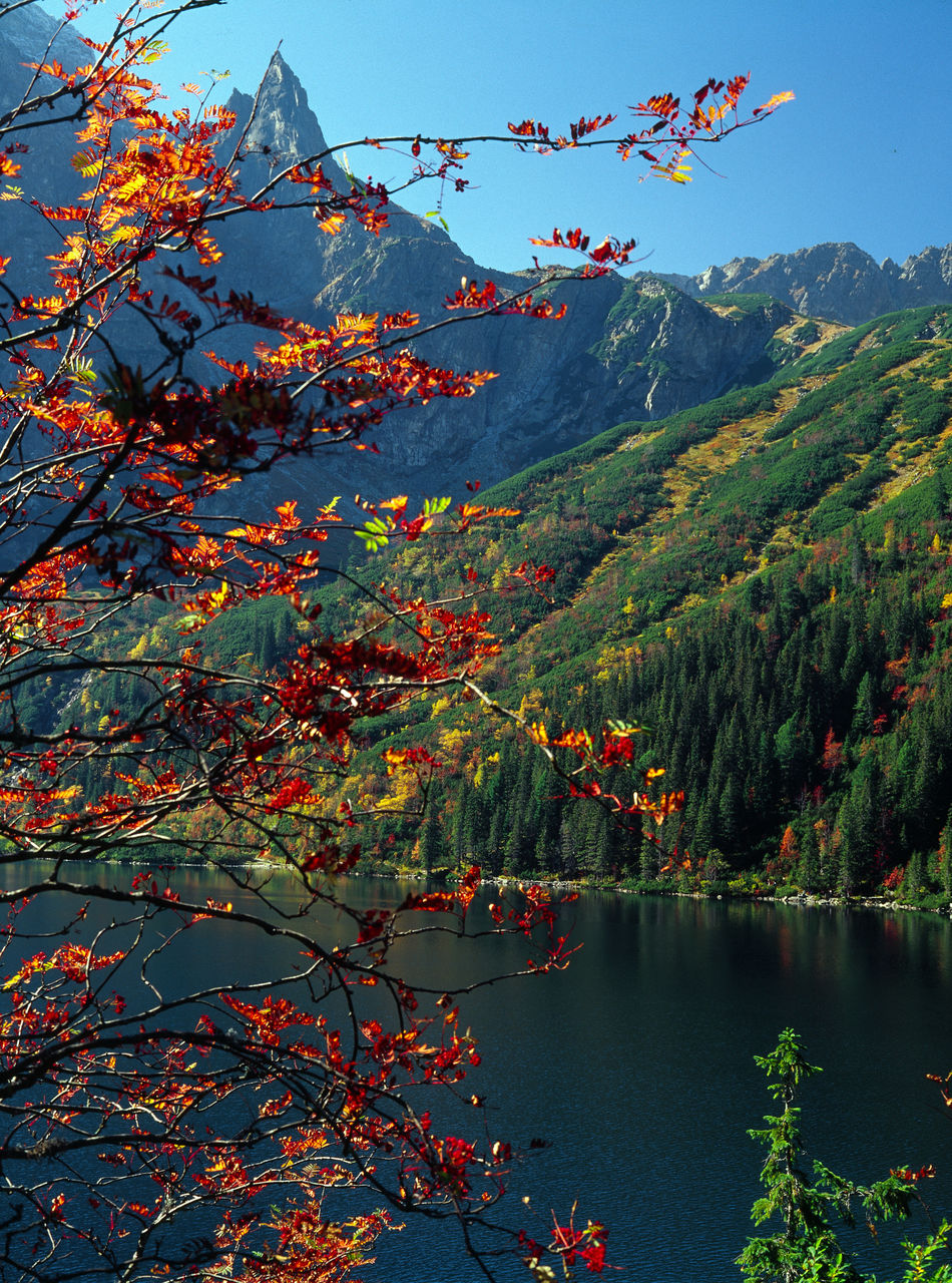 Autumn Autumn Beauty In Nature Branch Lake Morskie Oko Morskie Oko Morskieoko Mountain Mountain Lake Mountain Landscape Mountain Range Mountains Nature Outdoors Red Scenics Tatry Tatrymountains Tree Water