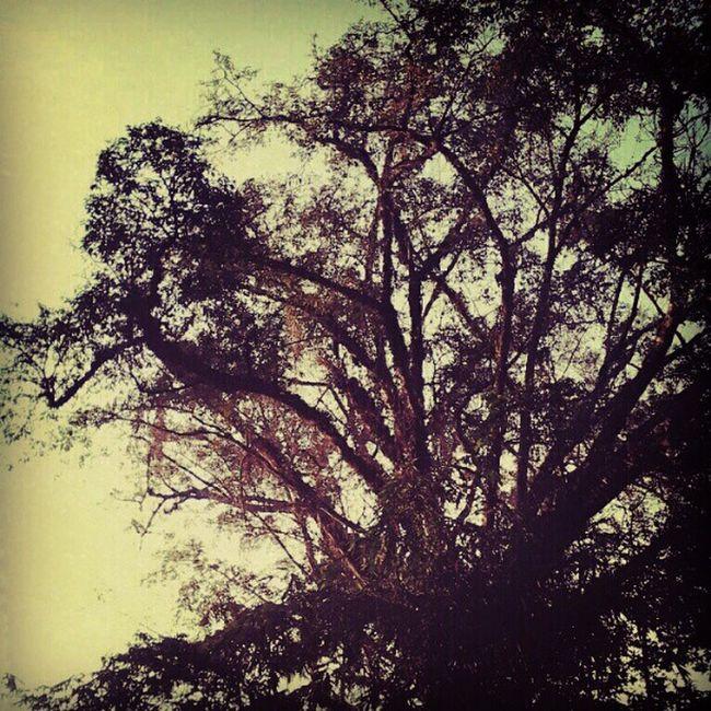 Pabuwaran Graveyard Trees Tree Branch nature mystic