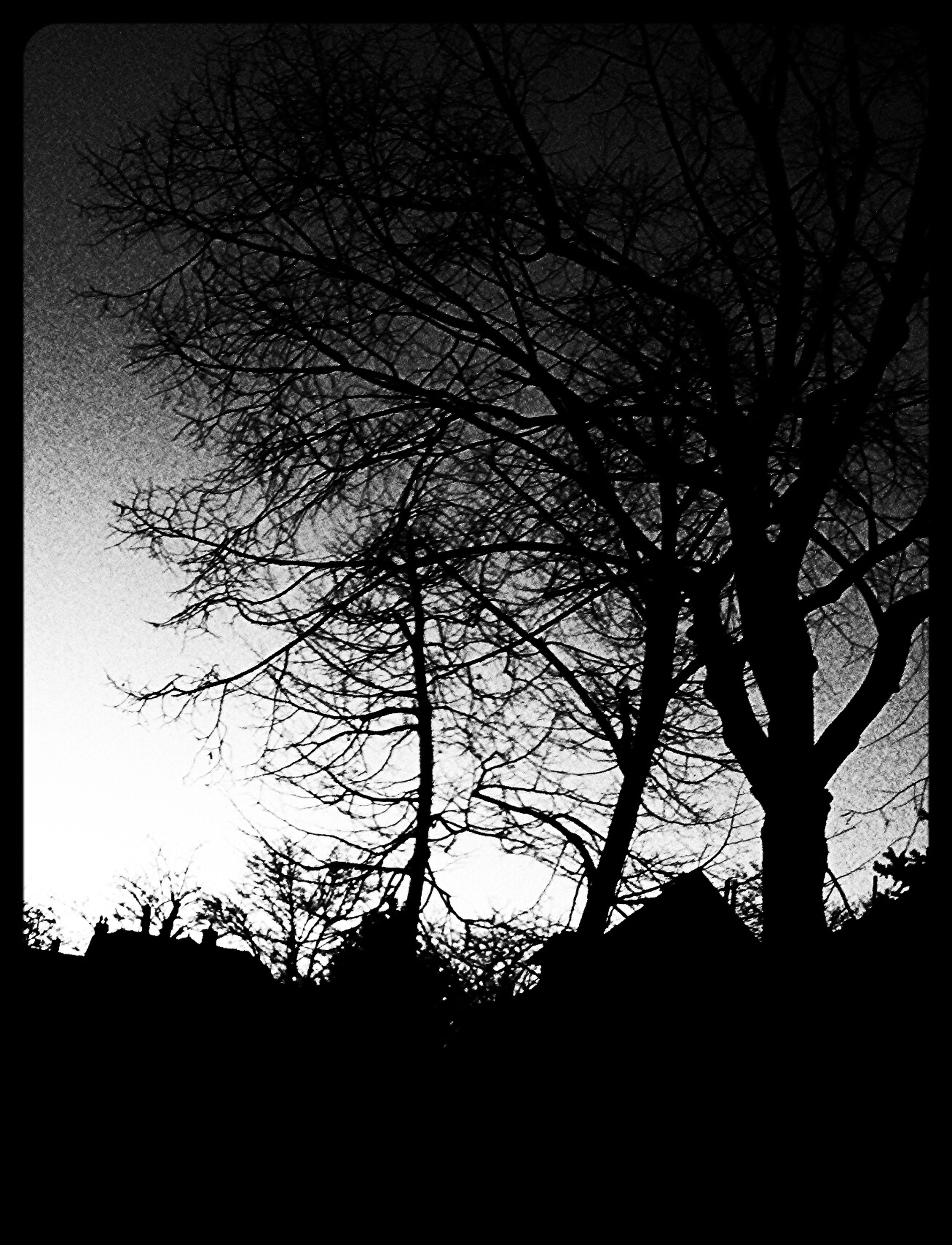 Spring night contrast Streamzoo Streamzoofamily #night Blackandwhite Nature #sky #trees