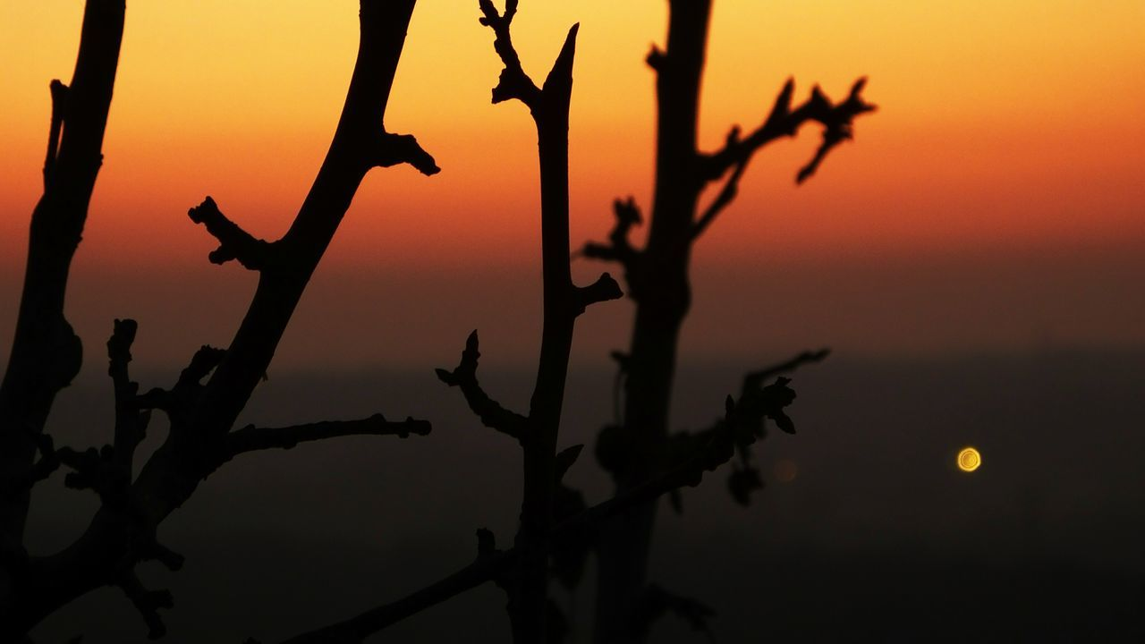 sunset, silhouette, orange color, nature, sun, no people, beauty in nature, outdoors, tranquility, sky, scenics, close-up, day