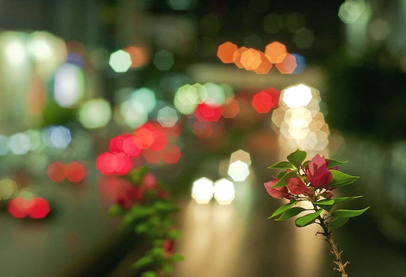 Flower Blue Fueng Nightphotography Night Lights Blaze แสงไฟ Light Light And Shadow Night