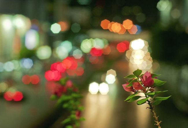 Flower Blue Fueng Nightphotography Night Lights Blaze แสงไฟ Light Light And Shadow Night