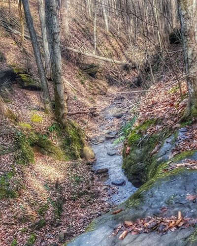 Naturebeauty_creeks Forest Outdoors Everything_imaginable Snapshots_daily Picturetokeep_nature Ig_addicts_fresh Natureornothing Igers_of_wv Wv_igers Pocket_allnature Country_features Adventure