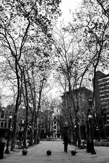 Person on the street Montevideo Perspective Profundity Blackandwhite Men Nature Park Person Real People Tree Urban Uruguay