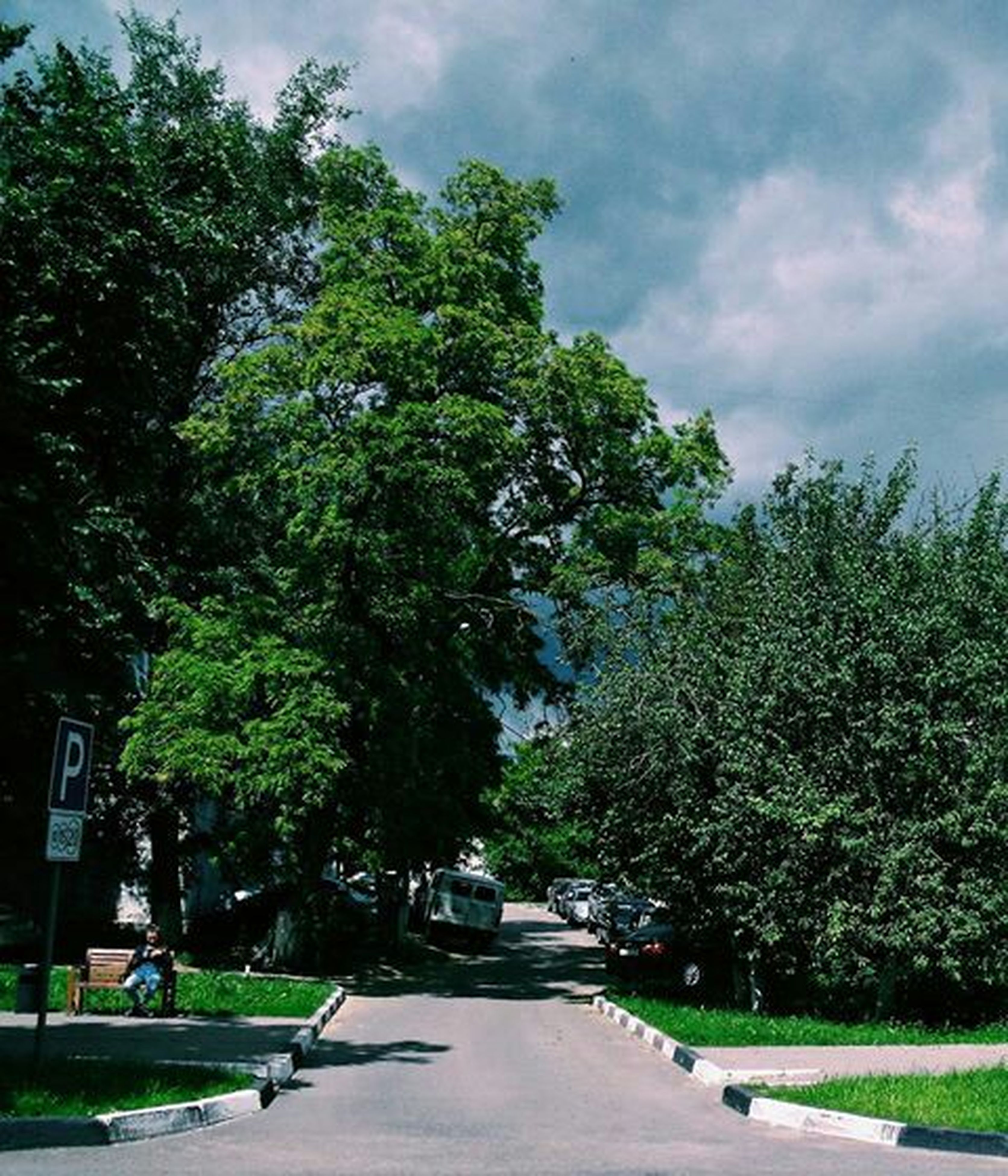tree, transportation, the way forward, road, car, street, land vehicle, sky, green color, diminishing perspective, mode of transport, growth, treelined, vanishing point, nature, outdoors, cloud - sky, day, sunlight, empty