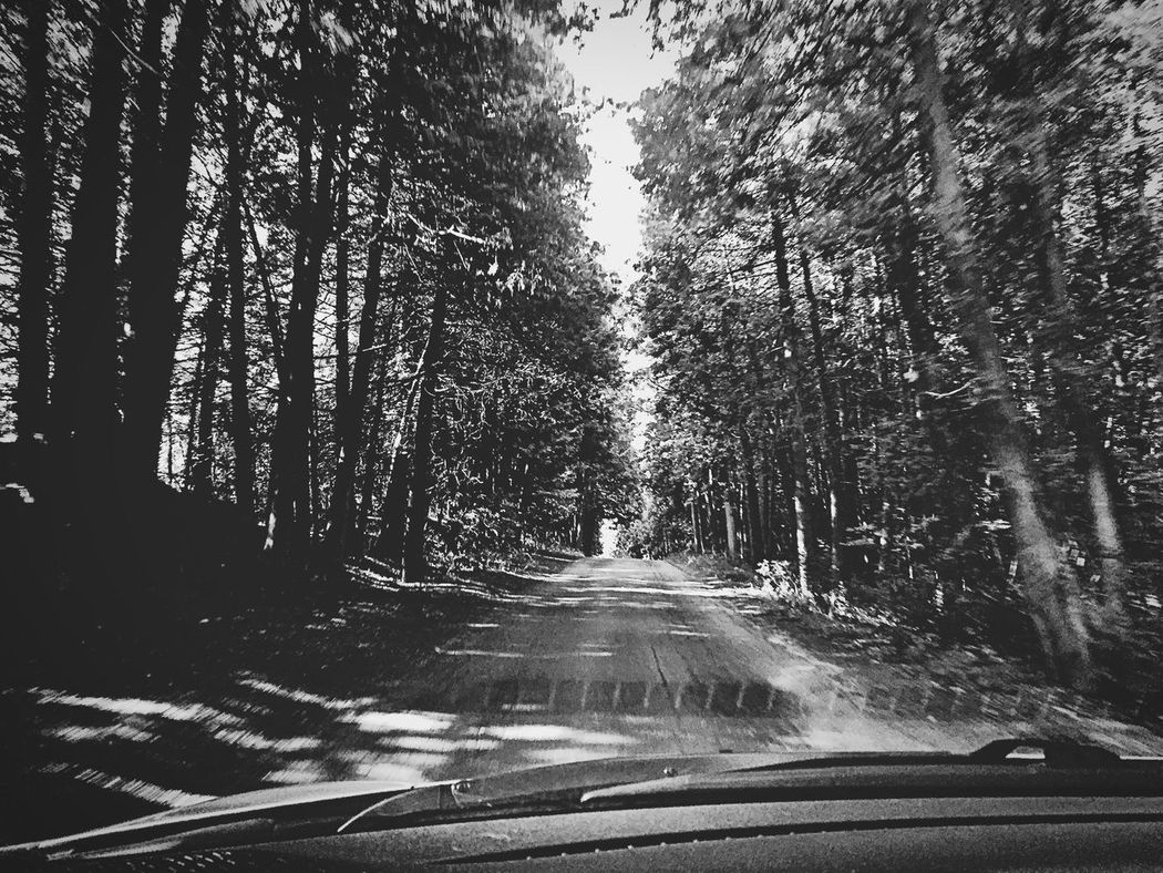 Through The Trees In The Car Through The Window Through The Trees On The Way Forest Conservation In The Car In The Forest Driving Through My Windshield Trees Road Nature Park Trees And Nature Inside The Car Black And White Black And White Nature Black & White Blackandwhite Contrasting Colors Nature_collection Windshield Forest Trees Park Trees Trees Collection