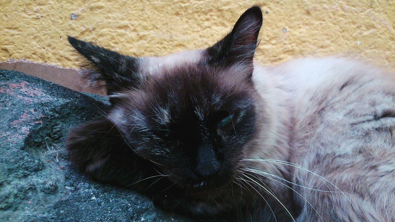 My Cat♥ Gatita  Mascotas FAMILIA♥ Amiga Hermosa