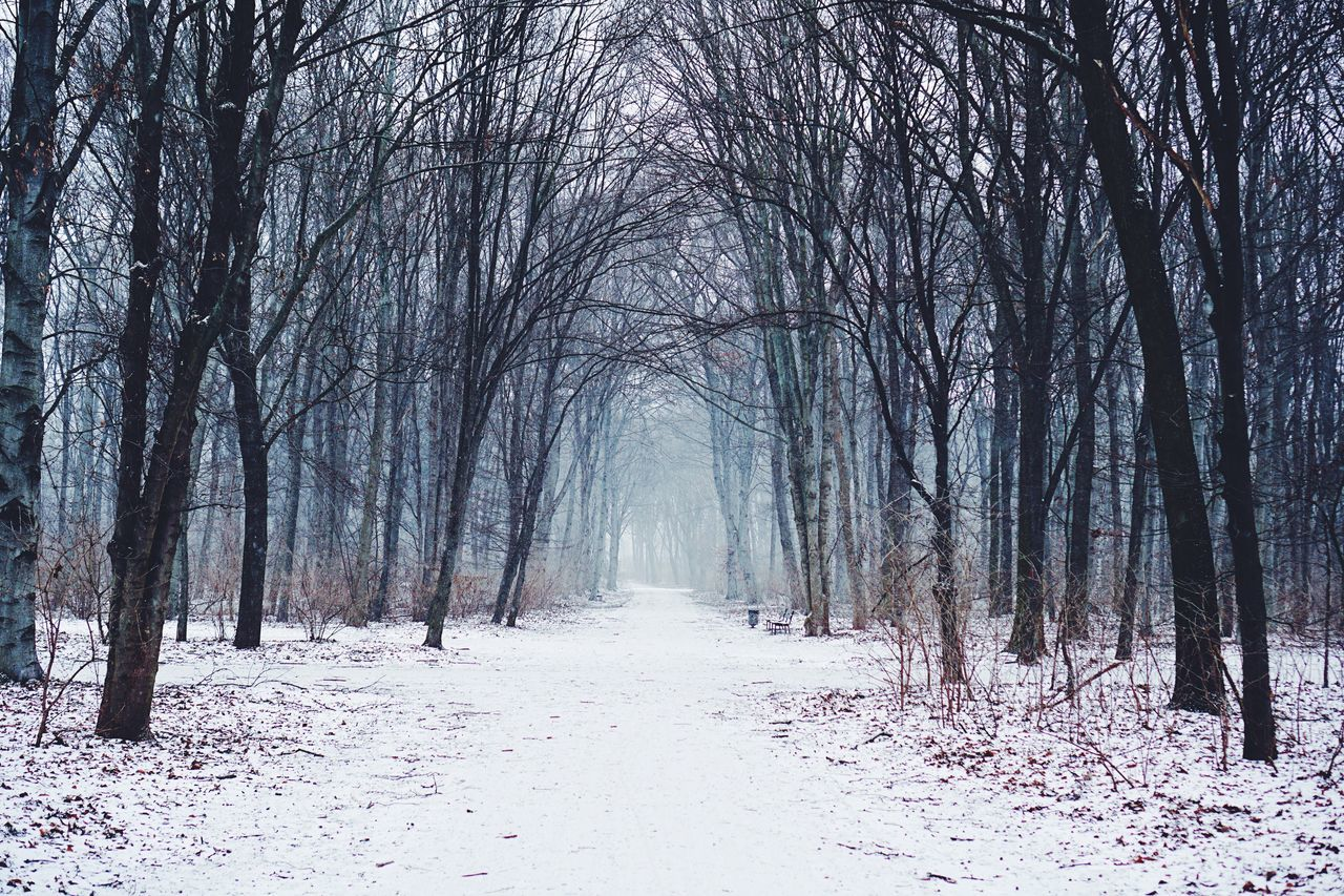 Cold Temperature Winter Snow Weather Nature Tree Beauty In Nature Outdoors Landscape Scenics Bare Tree Snowing Nature Photography Nature_collection Beautiful Nature Beauty In Nature Real Photography Winter Wonderland Berlin Winter Cold Days Wintertime White