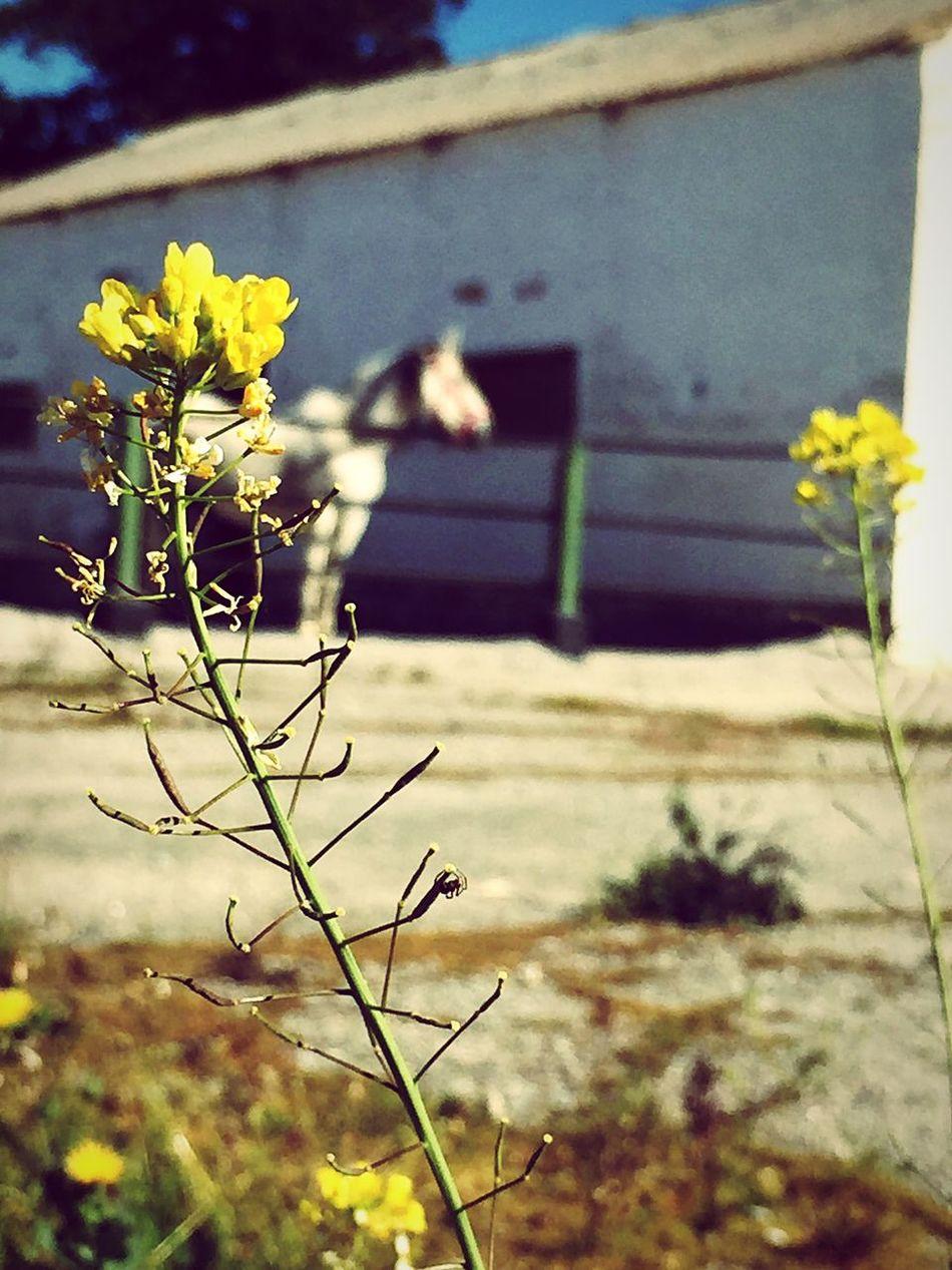 Spring Campsite Animal Photography Horse <3 Beautiful ♥ Enjoying Life Things I Like