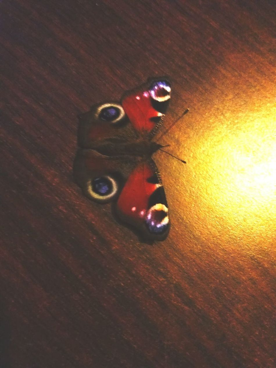 Butterfly Swallowtail Collorful Beautiful ♥