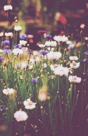Flowers :')