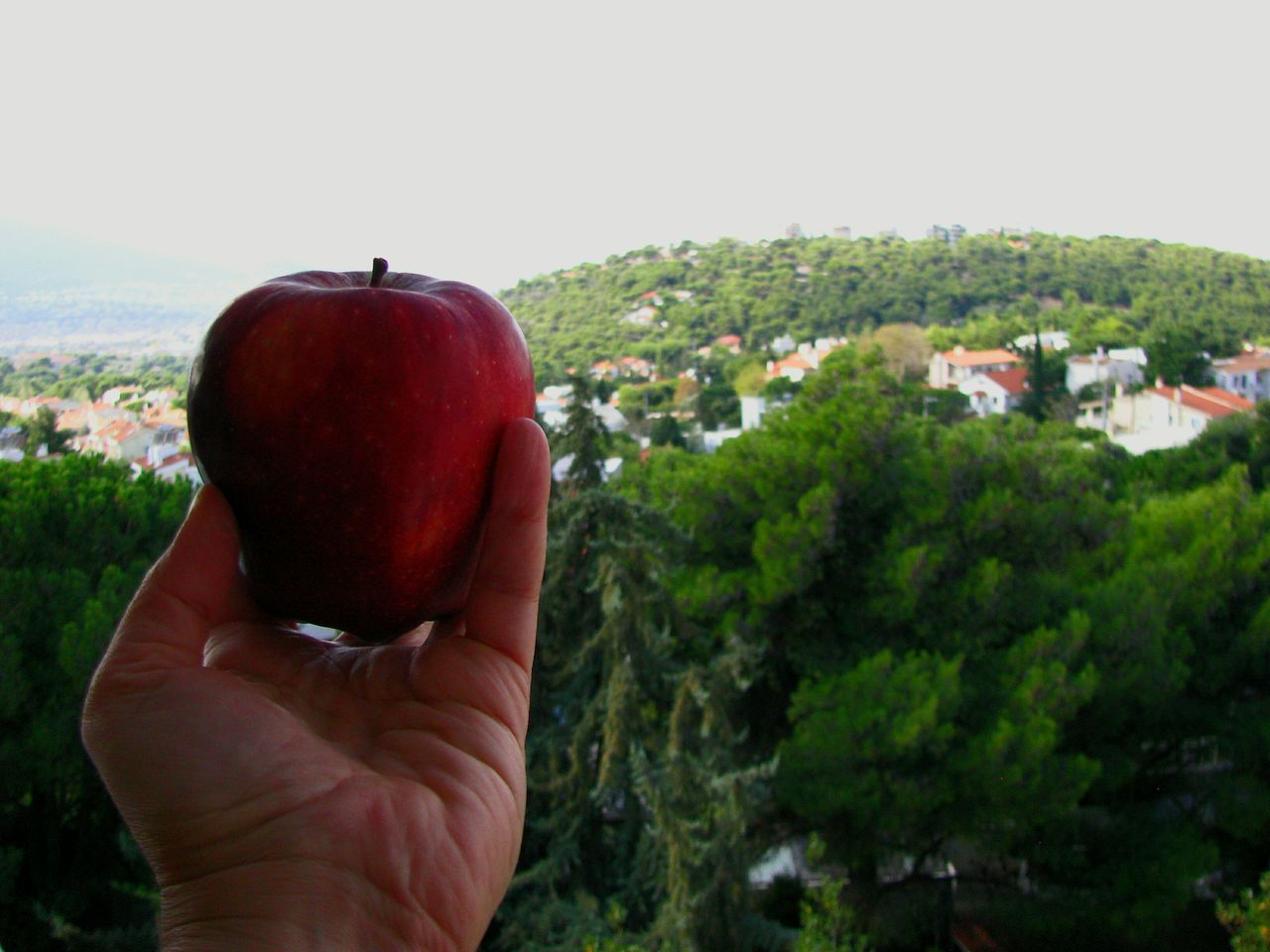 ShareTheMeal Apple Hand Holding Fruit Fruit Photography Fruits And Vegetables Food Food Photography My World Of Food Apples Red Apple Diet Food Ready-to-eat Healthy Eating Trees Landscapes Landscape Urban Landscape Architecture Flying High Art Is Everywhere EyeEm Diversity Cut And Paste Visual Feast