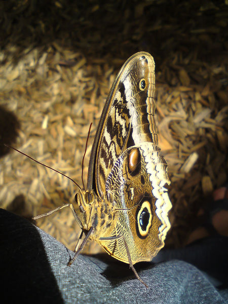 Animal Head  Animal Markings Beauty In Nature Butterfly - Insect Close-up Eyes Focus On Foreground Looking At Me Natural Pattern Nature Outdoors Pullover Schmetterling Wildlife