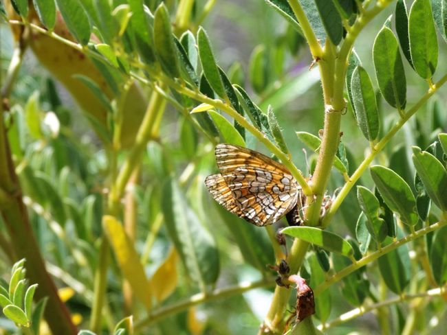 Animal Themes Animal Wildlife Animals In The Wild Beauty In Nature Close-up Day Grass Green Color Growth Insect Leaf Nature No People One Animal Outdoors Plant