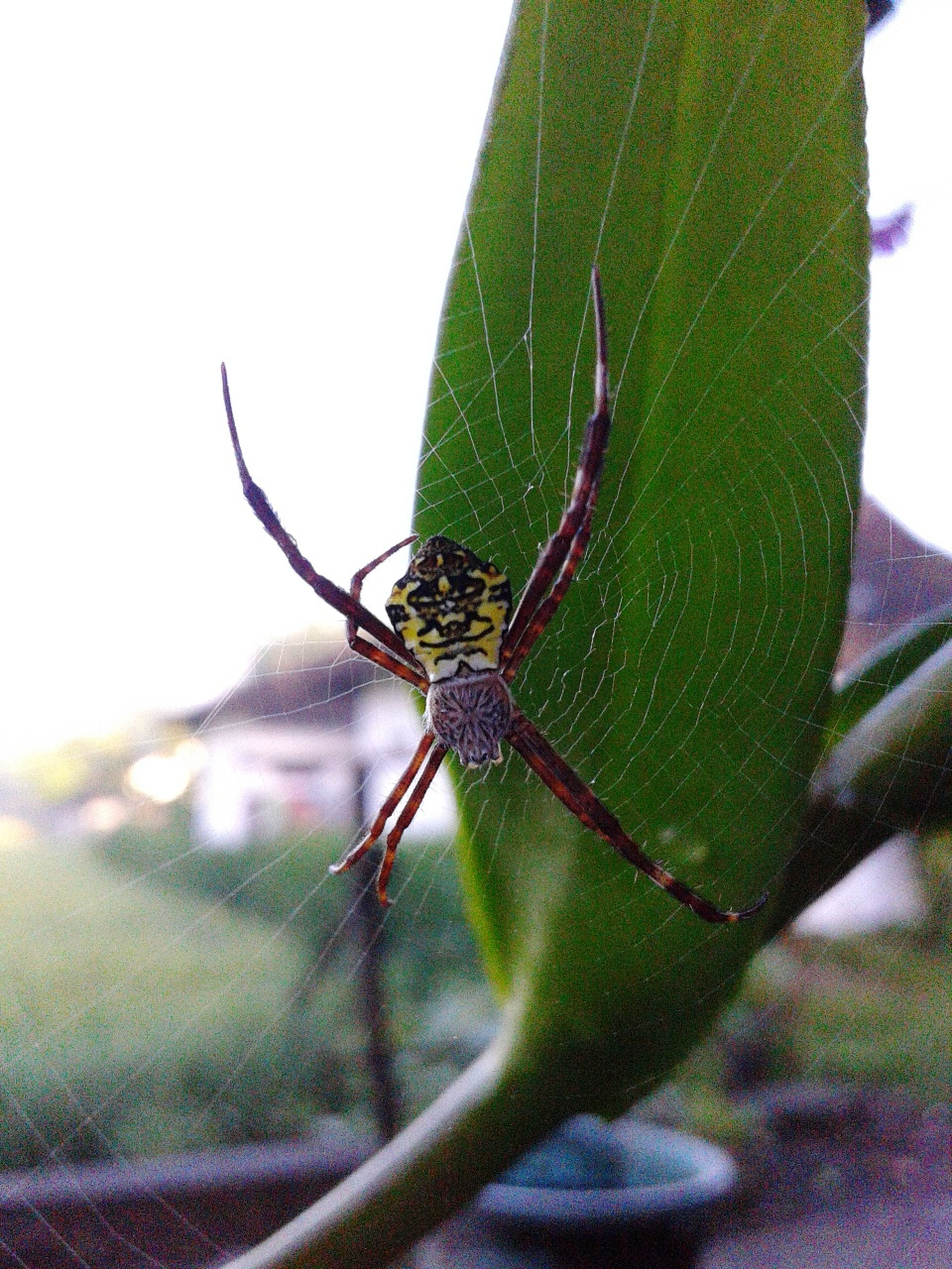 Macro Photography A Spider's Web One Animal Spider Web Morning Nature Cutes Spider Outdoors Wild Life Spider Web In Orchid Plantation INDONESIA