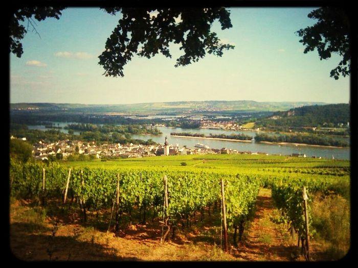 Rüdesheim Am Rhein Nature Rheinhessen Relaxing