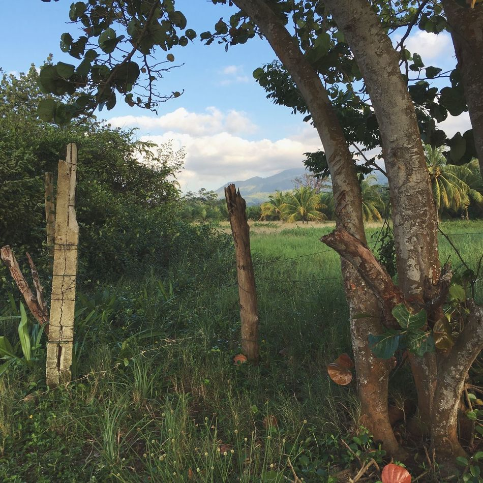 One of the quiet places in the world // Beauty In Nature Growth Tranquility Tree Trunk Scenics Grass Field Sky Landscape Honduranwilderness Palms Coconuts