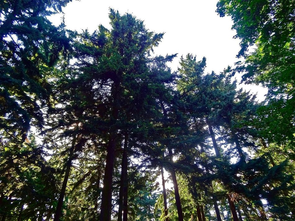 Enjoying Nature TreePorn Nature_collection EyeEm Nature Lover