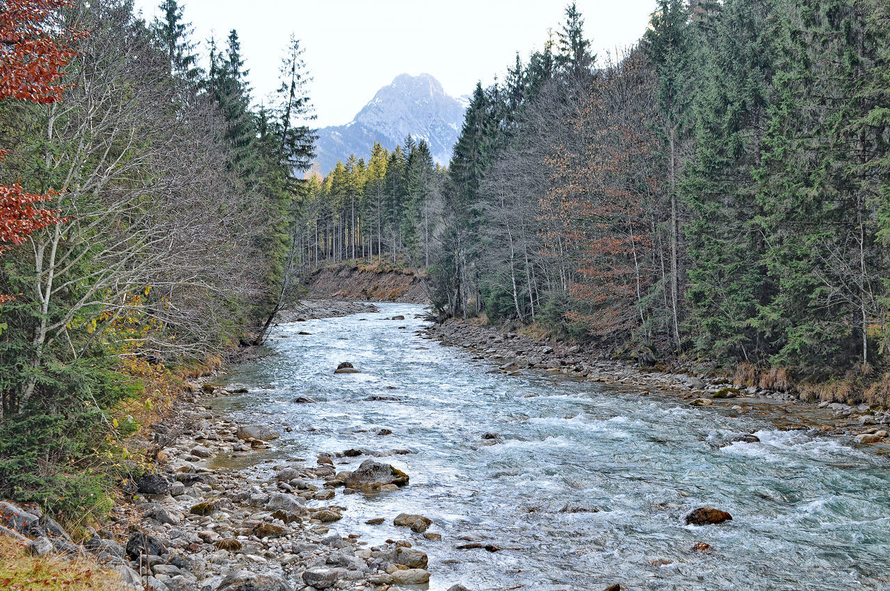 mountain torrent beck wildbach gebirgsbach Alpine Brook Alpine Stream Beauty In Nature Beck Day Destruction Forest Landscape Leading Mountain Mountain Creek Mountain Range Mountain Stream Mountain Torrent Narrow Nature No People Non-urban Scene Outdoors Rock Scenics Stream The Way Forward Tranquil Scene Tranquility